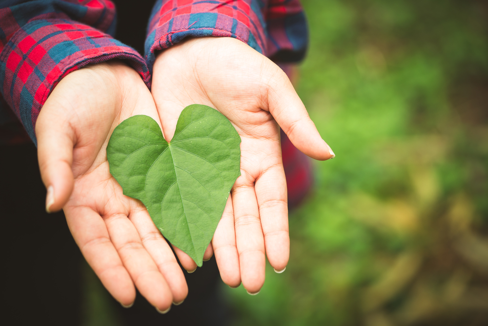 8 Tips for Going Green While Saving Green